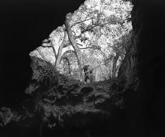 Dames Cave (macromary) Tags: 120 120film analog florida pentax6x7 mediumformat foma fomapan fomapan100 blackwhite analogphotograph bokeh bw blackandwhitefilm filmcamera film mechanicalcamera vintage vintagecamera nwflorida 75mm f45 rodinal citruscounty withlacoocheestateforest citrustract trail22 damescave nature cave limestone karst karsttopography vandalcave underground fl