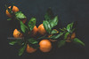Tangerines (Arx0nt.) Tags: food porn foodie photography tangerine mandarine still life dark low key moody top view fruit vegan vegetarian delicious ripe citrus summer winter green leaf toned artistic creative flat lay