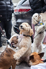 Buffy (dtank) Tags: easter egg event events hayley hunt nyc puppyparties seaport