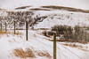 on and on it goes (hey ~ it's me lea) Tags: fence fencefriday hff alberta rural country prairie painterly landscape winter snowy