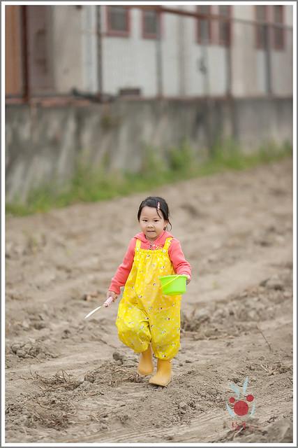 火龍果園星光野餐之找地瓜 烤地瓜 吃地瓜 (3)