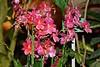 Париж, Ботанический сад (Oleg Nomad) Tags: париж франция ботаническийсад цветы орхидея кактус растения paris france botanicalgarden flower orchid
