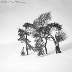 The Perfect Winter (.Brian Kerr Photography.) Tags: scotland scottishlandscapes scottish scotspirit scottishborders scottishlandscape scotspines sonyuk formatthitech visitscotland vanguarduk visitbritain trees snow winter coldmorning frozen frost blackandwhite briankerrphotography briankerrphoto landscapephotography photography photo landscape altasky45d firecrest brian10 a7rii snowing theperfectwinter tree sky