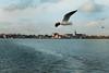 Fly up high in the blue sky (Patrick Scheuch Photography) Tags: vollendam meer sea netherlands niederlande holland europe europa natur nature bokeh möwe vogel bird marken water wasser