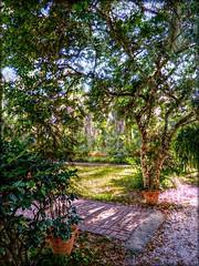 In the Courtyard (Chris C. Crowley) Tags: inthecourtyard sugarmillgardens garden pottedplants plants trees nature pavedwalkway path bricks grass outdoors portorangeflorida scenic landscape