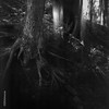 Light Leaks and Tree Roots (http://www.aimonephoto.shop) Tags: 6x6 blackwhite caffenolcm mediumformat rolleirpx100 spartusfullvue film monochrome safe