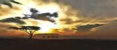Cherishville I (Dodo Ahanu) Tags: camels wildlife