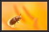 """Polleneater..."" (NikonShutterBug1) Tags: nikond7100 oshiro60mmsupermacro beetle daffodil insect pollen entomology nature wildlife bokeh spe smartphotoeditor sundaylights beautifulbugbuttthursday"