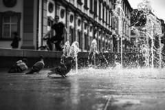 morning shower... (danye.de) Tags: bnw morning blackandwhite contrast city shower doves water sonnartfe1855