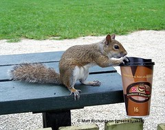 The REAL Reason Squirrels Are Jittery
