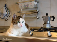 A perfect Italian cat... (*DaniGanz*) Tags: white cute kitchen coffee breakfast cat interestingness interesting tabby kitty greeneyes explore 400 mostinteresting blogged gatto bianco moka kittie caffe cucina micio occhiverdi fusillo tigrato cafexperiment daniganz flickrsexplore interestingcat cafexperimentcom gggbreak