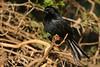 Red Eye Flight (kai_ross) Tags: africa kenya safari samburu bokehsoniceaugust bokehsoniceaugust11