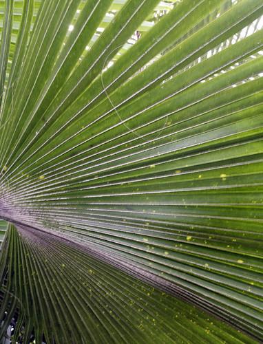Kew gardens