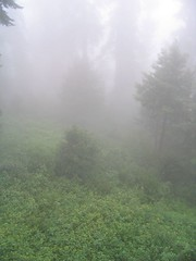Misty Mountain (geoaxis) Tags: august greenry nathiagali