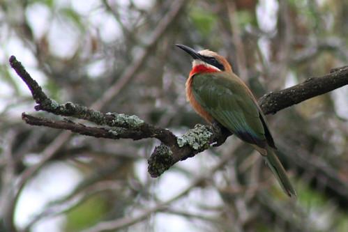 Kenya 2006_0720