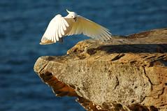 DSC_5694 (emjee) Tags: ocean sydney australia coogee