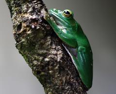 Frog (C) 2006