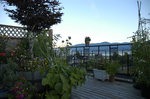 North West View of deck garden in Vancouver.