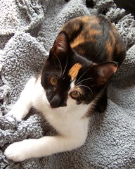 my pretty kitty (F.Scala) Tags: cute cat furry kitten warm nap fuzzy kodak sweet sleep small adorable shell tortoiseshell stretch calico tricolor tortie tortise p850 bestofcats