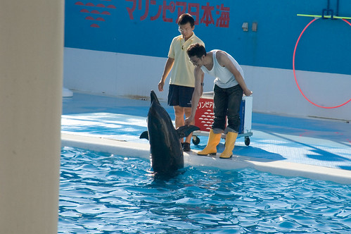 It shakes hands with the dolphin