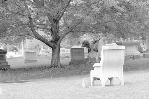 chair facing tree