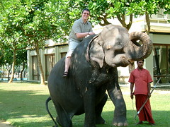 Show Jumping (Dr Chris Jones) Tags: holiday elephant warm ride trunk srilanka