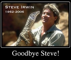 I will miss him! (Crocodile Hunter Died today) (steve_steady64) Tags: news nature television animals death zoo memorial stingray steve documentary australia crocodile queensland tribute incident steveirwin animalplanet environmentalist irwin crikey discoverychannel crocodilehunter abigfave stevegatto stevegatto stevegattofolgarida extremedesign