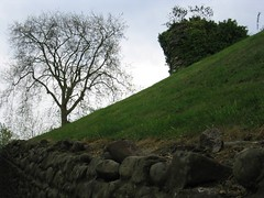 slope (andrewpaulcarr) Tags: tree wall wales ground slope llandaff andrewcarr