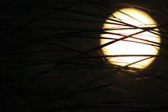 grassy moon (kizard) Tags: moon grass night perspective fullmoon moonlit moonrise backlit 9706 throughthegrass