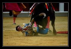 Tragedia (Chema Concellon) Tags: espaa spain valladolid toros toro matador torero plazadetoros tauromaquia 50v5f 100vistas cogida chemaconcelln newphotographers fernandorobleo
