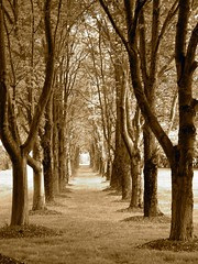 Tree Lined Pathway (sepia) (wplynn) Tags: trees columbus tree church sepia landscape path indiana pathway disciplesofchrist disciples northchristianchurch