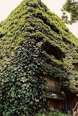 aoyama4 (gracias!) Tags: green film japan architecture tokyo pentax ivy aoyama omotesando mz5  dojunkaiapartment