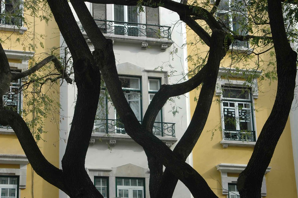 THE DANCE OF THE LISBON TREES-1