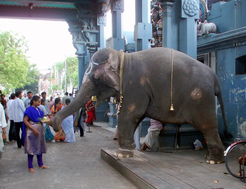 Sacred elephant in front of a temple in Pondychéry