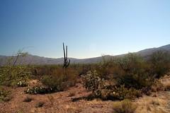 Desert (lharkness) Tags: arizona tucson saguaronationalpark