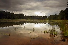 lake (Ray Byrne) Tags: trees sky lake reflection water landscape weeds north northumberland messy canon350d gloom northeast cragside landscapephotography raybyrne byrneout byrneoutcouk webnorthcouk