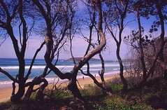 200504 020 Coffs Harbour (williewonker) Tags: ocean new sea tree beach wales fishing sand surf harbour south wave australia rod coffs elitechromeslide