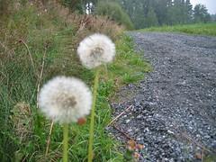 152_5240 (BjrnS) Tags: nature norway publicphoto dmmesmoen