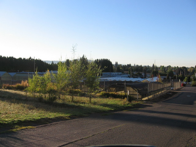 greenhouses, mt. tabor