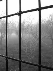 mist on a spider's nest (stefg74) Tags: bw mist fog spider blackwhite web free steven stg gst stefano stefanos  freeuse  ithinkthisisart  stggr1 justrss justrsscom wwwjustrsscom httpwwwjustrsscom stefg74