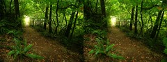 tunnel to the clearing (The Procrastinating Philosopher) Tags: oregon portland 3d pdx parallel forestpark wildwoodtrail
