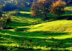 How green is my valley (aremac) Tags: green d50 germany landscape deutschland nikon bravo meadow nikond50 odenwald badenwrttemberg gtaggroup goddaym1 wilhelmsfeld abigfave 123f50 3000f120