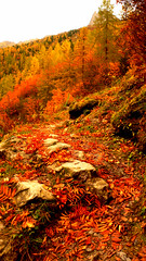 fall (cedccb) Tags: snow france mountains alps fall station montagne europe colours village forrest rad bum resort passion n