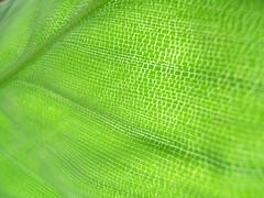 green (pink*fish) Tags: ilovegreen ilovelines ilovelight