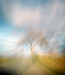 Yggdrasil (nicolai_g) Tags: color tree film blurry moo dreamy spacetime