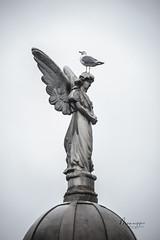 Winged Creatures (Monaggio) Tags: barcelona poblenou cementerio cemetery angel escultura sculpture seagull gaviota aves ave bird