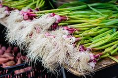 Green Garlic (HikerDude24) Tags: santamonica santamonicafarmersmarket farmersmarket market food garlic greengarlic produce losangeles winter nikon d5100 50mm