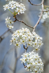 Blossoms, Lake Conestee, SC (hmthelords) Tags: lakeconestee