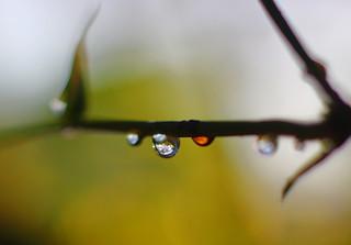 Focal drop :)