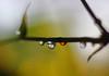 Focal drop :) (Debmalya Mukherjee) Tags: dew drops 50mm debmalyamukherjee canon550d extensiontubes morn morning